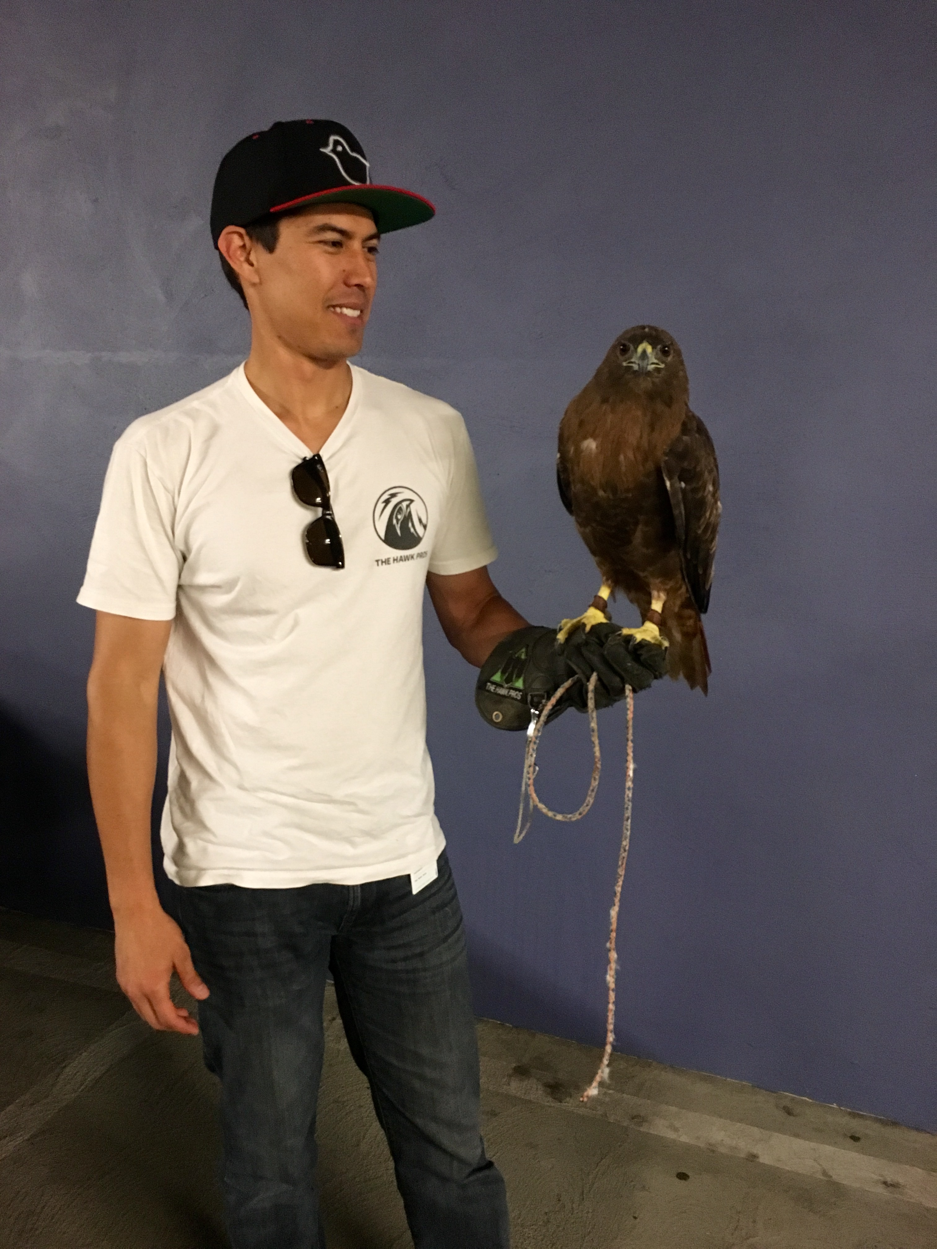 The Art of Falconry | Unframed