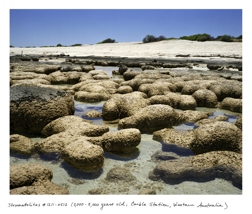 Stromatolites #1211-0512 (2,000 - 3,000 years old; Carbla Station, Western Australia)