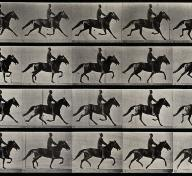 Still from Eadweard Muybridge's motion study of horses. Image courtesy of Wellcome Images, a website operated by Wellcome Trust, a global charitable foundation based in the United Kingdom.