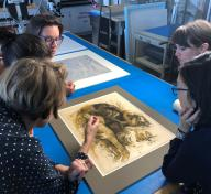 "Getty curators Stephanie Schrader and Edina Adam, Getty conservator Michelle Sullivan, and former LACMA (now Getty) curator Naoko Takahatake examine the Gauguin ""oil transfer drawing,"" image courtesy of Madison Brockman. Foreground: Paul Gauguin, Eve ['The Nightmare'] (recto); Eve ['The Nightmare'] (verso), c. 1899–1900, The J. Paul Getty Museum, Los Angeles; Background: William Blake, Satan Exulting over Eve (detail), 1795, The J. Paul Getty Museum, Los Angeles"