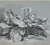 François Boucher, Study of a Cabbage, c. 1735